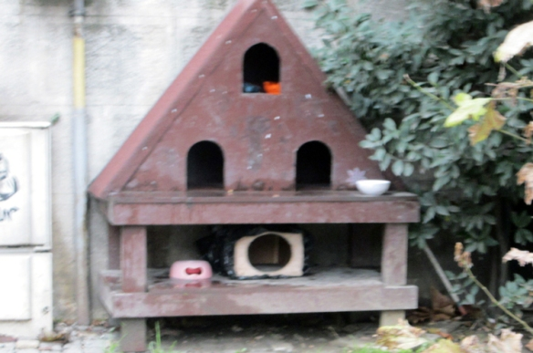 A cat hotel in Cihangir.